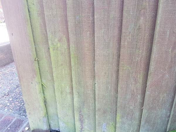 mould-and-algae-growth-on-wooden-fence