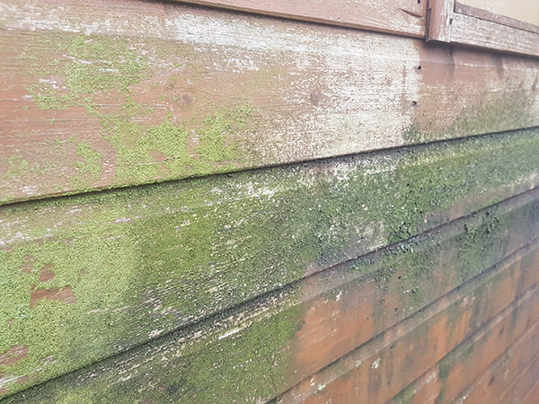 Using a wood or shed cleaner to remove mould and algae